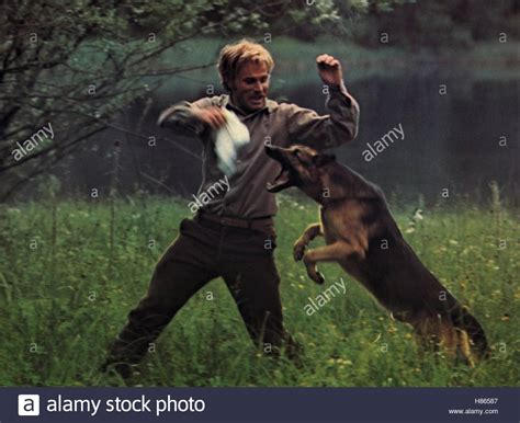 film gladiator hund nero stockfotos nero bilder seite 15 alamy