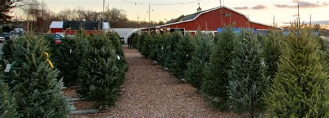 stores selling real christmas trees trees d 233 cor tree shop nj farms view farm