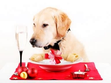 best food for senior golden retriever food analysis for golden retriever dogs