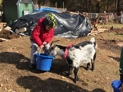 get your goat rentals 100 get your goat rentals caes newswire targeted