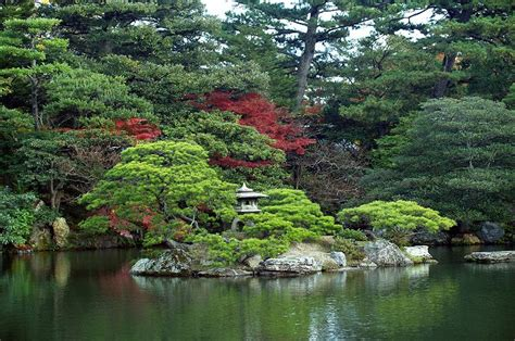 pflanzen für japangarten idee garten japanischer