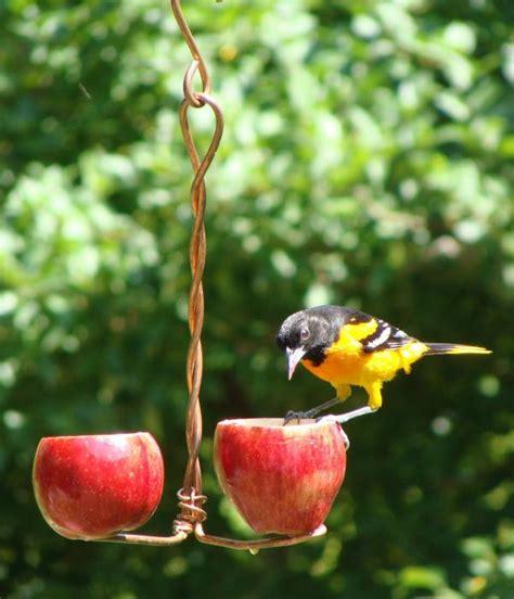 songbird essentials double fruit oriole bird feeder