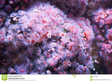 fiori di colore rosa fiori di colore rosa di mare fotografia stock immagine