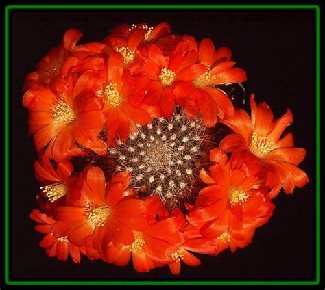 imagenes de rosas grandes hermosas nombres de flores exoticas del mundo imagen de rosas rojas