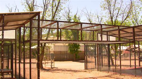 outdoor bird aviary  backyard project