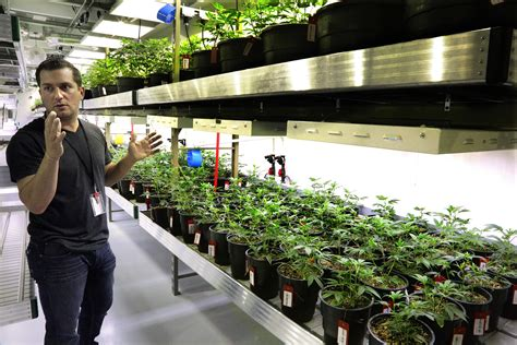 Cannabis Possession Criminal Record Illinois Legislative Bill Would Remove Criminal Penalties