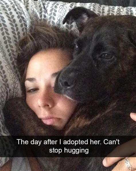 funniest dog snapchats part  top