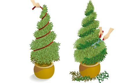 Buchsbaum In Form Schneiden 2025 buchsbaum schneiden baumschnitt selbst de