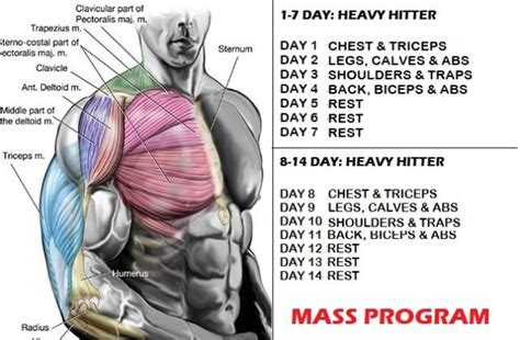 bodybuilding mass gain programs articles muscle mass and strength increase 10 simple tips for