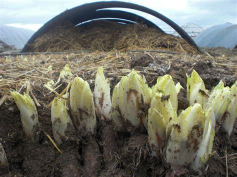 cuisiner des pommes de terre comment cuisiner des pommes de terre ohhkitchen com