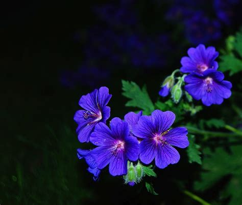 fiori belli di notte gratis foto blomma blomning bl 229 p 229 natten gratis