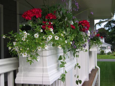 flowers window boxes early flowers and window planters that you will