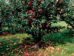 guide to growing apples hgtv