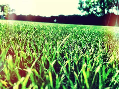Rasen D Ngen Zeitpunkt 3443 by Vertikutieren Bei Nassem Rasen Rasen Vertikutieren