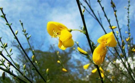 jean yves genet les fleurs sauvage de jean yves de houille 2