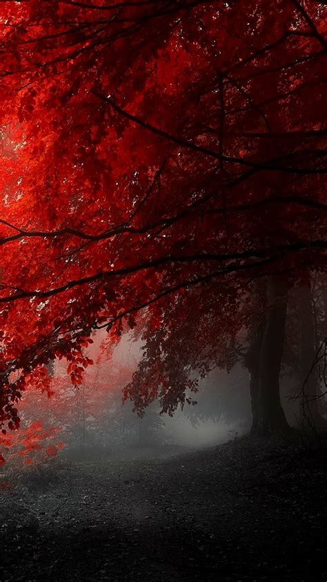 wallpaper hd iphone 6 red awesome red tree iphone 6s wallpapers hd