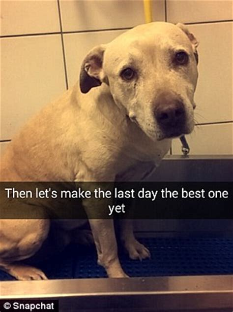 dogs last day snapchat story shows owner treat dying pet to packed day before being put