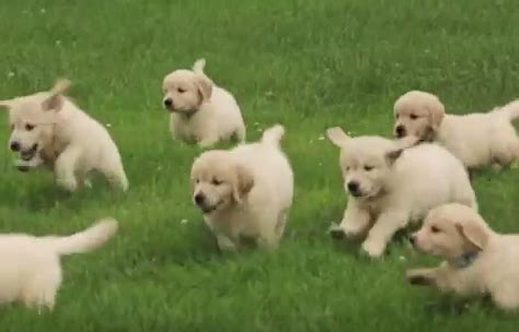 a bunch of puppies mytalk 107 1 everything entertainment st paul minneapolis here are a bunch of