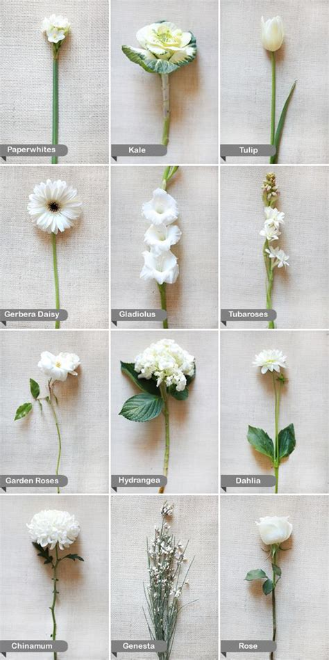 Wedding Bouquet Names by White Flower Guide White Wedding Flowers Flower And