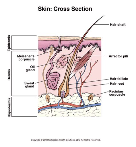 how to do cross sections premier care pediatrics patient information skin cross
