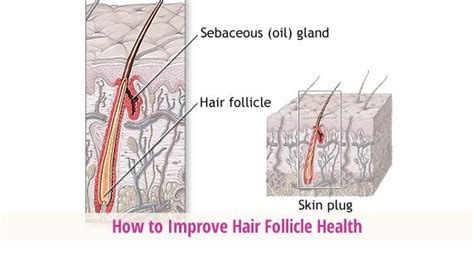how to strengthen hair follicles in females over 40 how to improve hair follicle health