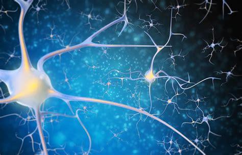 creatine h pylori h pylori infection 101 h pylori facts and associated