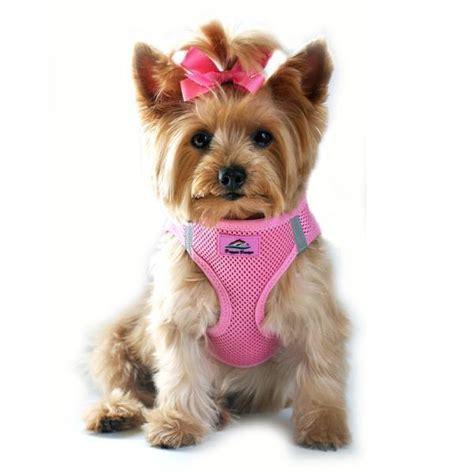 yorkie harness harness chihuahua poodle yorkie maltese choke free harness designer