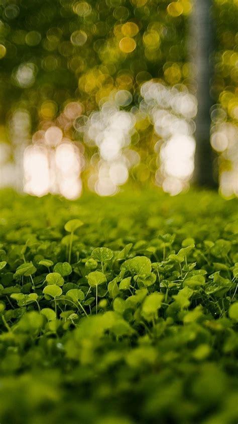 blurred background bokeh grass green nature wallpaper