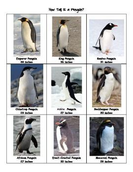 Db Slide Learn Flash Cards Animals 92 best penguin study images on open house
