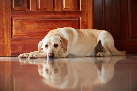 dog separation anxiety pooping in the house when your dog has separation anxiety here s how to help