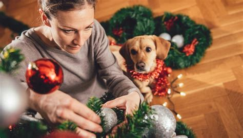 are christmas trees poisonous to dogs and other