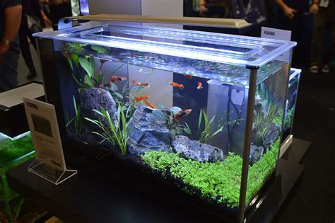 fluval spec v aquascape freshwater tanks of the aquatic experience 2016 part 1