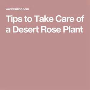 25 best ideas about desert on hippie