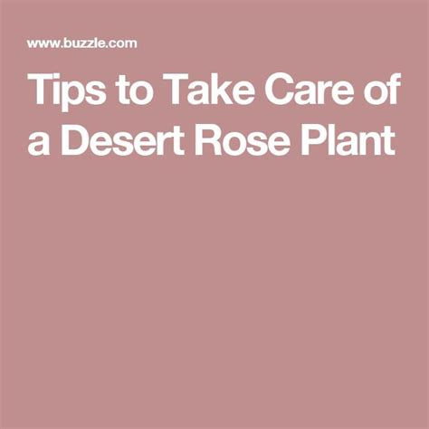 tips on viginal taking care the easiest and best tips to take care of a desert rose
