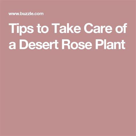 25 best ideas about desert rose on pinterest hippie