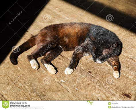 sleeping on hardwood floor sleeping cat on wood floor royalty free stock photo