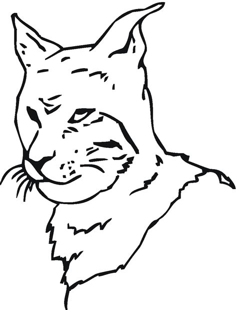 bobcat coloring page free coloring pages of bobcat