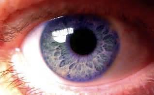 human eye color human eye colors violet unexplained