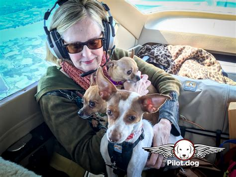 pilot dogs pet for a vet rescue flight helps save four dogs doobert animal rescue made simple