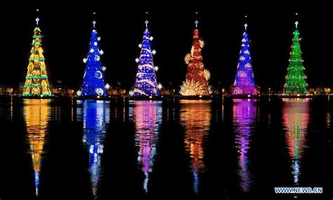 christmas trees in brazil trees seen in brazil s daily