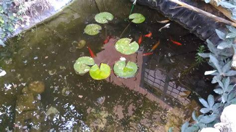 vasche per pesci da giardino vasche per pesci da giardino il giardino delle