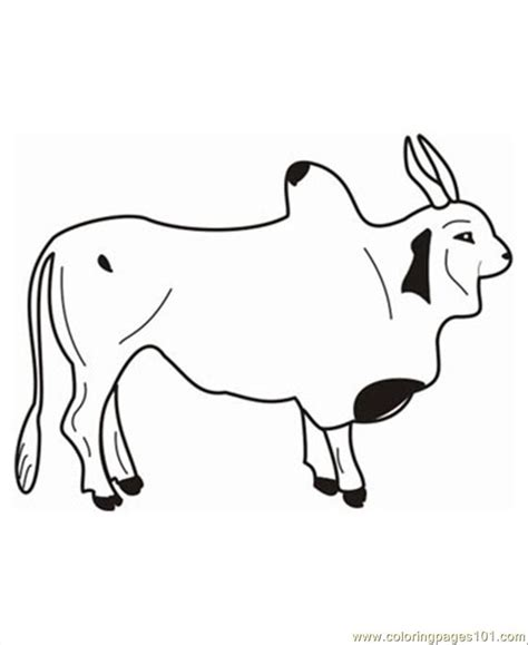 bull5 coloring page free bull coloring pages