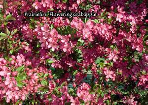 flowering trees san jose payless hardware rockery