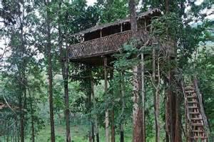 Top 10 Tree Houses Top 10 Amazing Treehouses Somethin