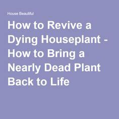 how to revive a plant 1000 images about plants on pinterest indoor house