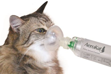 cat couching reasons why your pet is coughing natural treatments