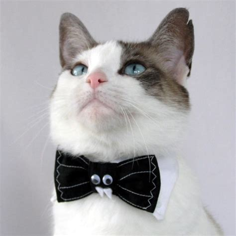bro j top 10 best cats with bow ties pictures