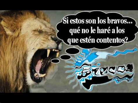 imagenes graciosas leones del escogido fotos graciosas de los leones del caracas imagui
