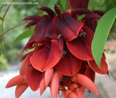 imagenes de flores uruguay el ceibo 225 rbol y flor nacional de argentina plantas