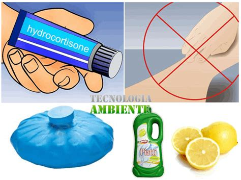 pulci da materasso pulci sull uomo come riconoscerle ed eliminarle